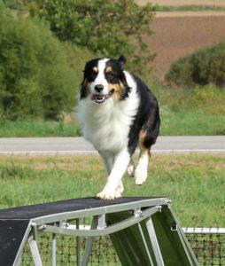Dog Walk Fun!